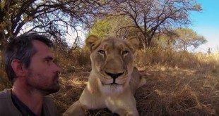 leeuwenfluisteraar