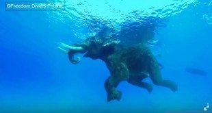 Olifant in de zee